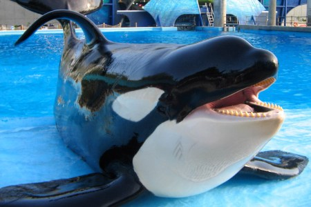 "Shamu says ""Take this job and shove it!"""