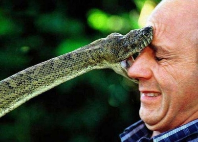 A snake kissy-poo. Another reason to love 'em.