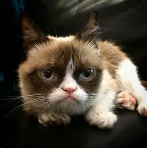 Good old Grumpy Cat...too busy spending his millions on gold kitty litter.